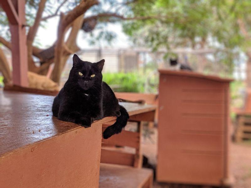 ラナイ・キャット・サンクチュアリの猫たち(=^・^=)